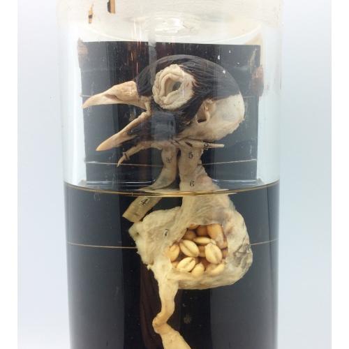 verrerie contenant un tube digestif de poule