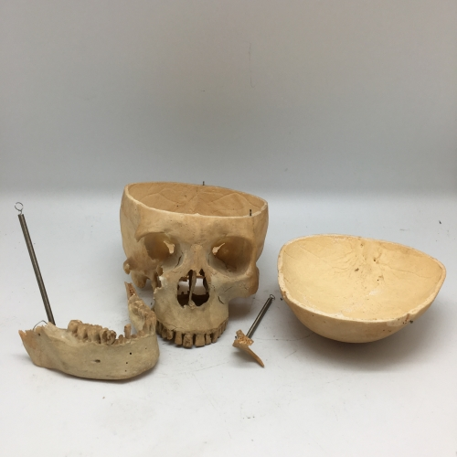 crâne médicalisé
